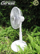 36W high efficiency BLDC pedestal fan