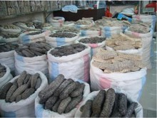 Dried Sea Cucumber ( Best Quality ) Available