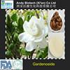 High Standard 50% Gardenoside Gardenia Jasminoides Ellis Extract Powder