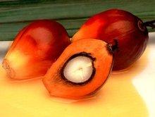 MALAYSIA Crude Palm Oil