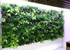high quality wall hanging plant, landscape decoration, artificial green wall
