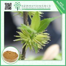 hot selling 10%-50% Chlorogenic acid /low price Eucommia ulmoides oliver leaf extract/Cortex Eucommiae leaf extract