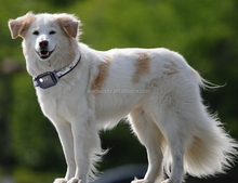 Simple real time mini gps tracker dog LDW-TKP19E