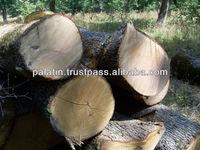 A/B/C Grade White Oak Logs