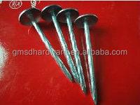 Hot sale galvanized umbrella head roofing nails (Factory)