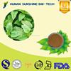 Reasonable price of Lemon balm P.E. 5%-30% Rosmarinic acid