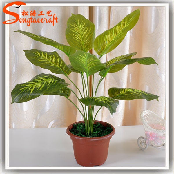 Names of plants plastic pots for plants ornamental plants aquarium plants garden plants indoor - Names of indoor plants ...