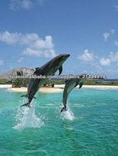 Imagen 3d de delfines