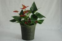 horticultural plastic flowerpot,rattan plastic planter,cheap plastic garden pot