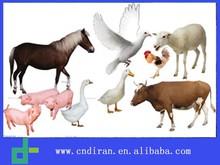 GMP 10% Florfenicol Veterinary Medicine/ Antibiotic/Wholesale Drugs