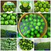 BEST PRICE GREEN LEMON SEEDLESS- HIGH QUALITY
