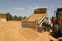 Hard and Soft Wheat