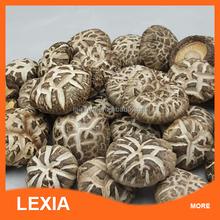 Factory price High Quality Fresh Shitake Mushrooms