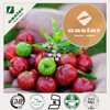 5% to 25% VC Natural Acerola Cherry Extract, Acerola Cherry Powder