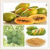 papaya extract papain/papaya extract powder/high quality papaya extract.