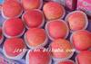 shanxi bulk fresh new crop china fresh fruit qinguan apple