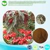 100% original Herbal Medicine Natural japanes herb Ardisia Herb Extract