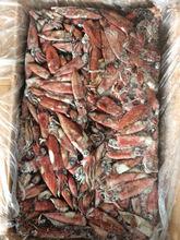 2015 July Frozen Seafood Loligo Edulis Squid EU Standard
