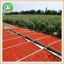 Popular hot sale dried goji berry 580grains per 50 gram