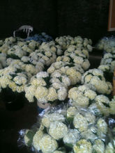 Fresh Cut Flowers Direct From Farms in Colombia