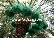 Green Color Date Palm Cover Bag, Used in Middle East
