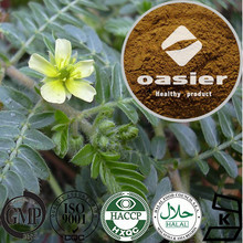 Factory Supplier Plant Extract ISO Kosher Certificate 40% 98% Saponins Tribulus Terrestris Extract Powder