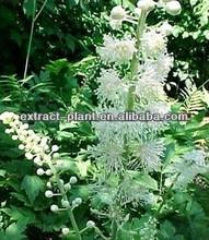 natural herb powder wild Black Cohosh extract