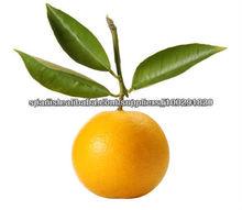 100% Pure Bergamot Oil (IP/USP)