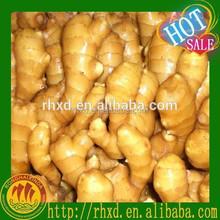 varieties of ginger