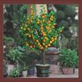 Laranja artificial frutas bonsai planta jardim deco LED luz da árvore flor artificial & frutas bonsai para o festival de iluminação