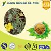 100% Natural Saponins Herb Tribulus Terrestris 20% / 40% / 70%/ 90% Saponins