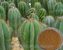 Cholla Stem Extract/cactus/Cactaceae Extract Powder