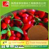 Manufacturer sales goji berry extract Lycium Barbarum Polysaccharides