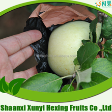 Shaanxi green apple fruit
