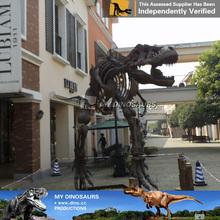 MY DINO-M08 Life size dinosaur skeleton dinosaur statues