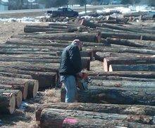 Hardwood Veneer Logs