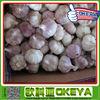 2015 garlic price of normal garlic,natural and from shandong