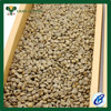 Top quality green coffee bean free sample coffee green bean