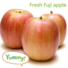 Chinese/China fresh sweet red Fuji apple for sale