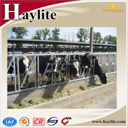 cow cattle galvanized headlock