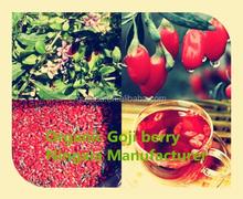 High Quality (SO2 Free) Goji Berries, EU Certified Organic goji berry, Ningxia goji berries