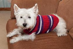 top sale designer dog sweaters for wholesale