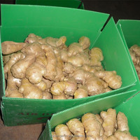 Shandong fresh ginger with Global GAP for wholesales