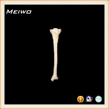 flexible de los huesos del esqueleto de la tibia y perone