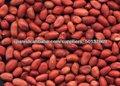 Kernel maní piel roja 80/90