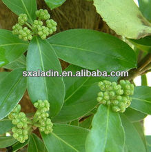 Natural herb extract powder morinda officinalis how extract/radix moridae officinallsextract 10:1