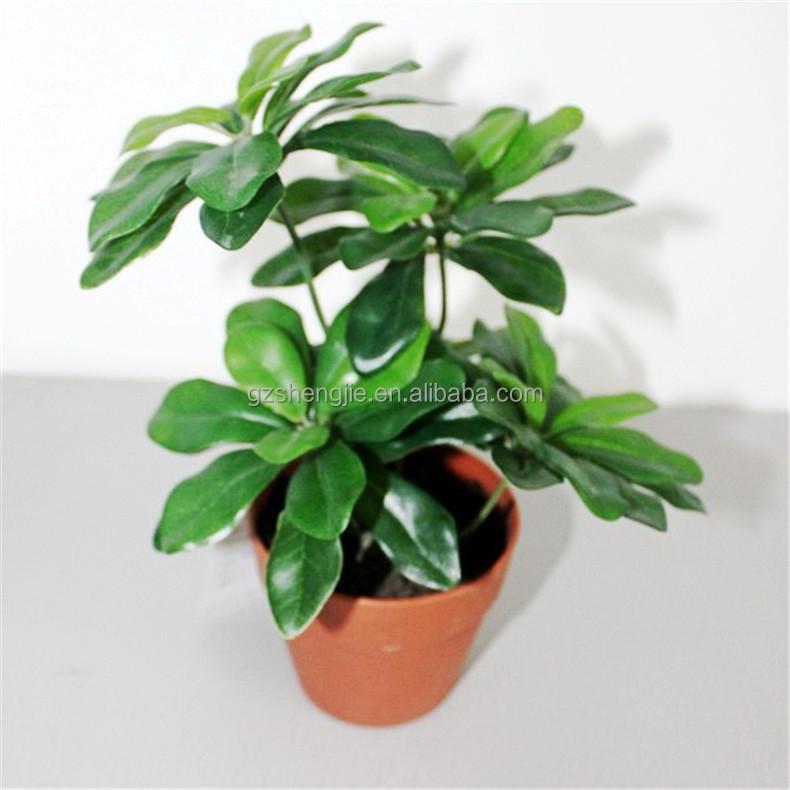 Sjzjn o59 toutes sortes de types de mini plante verte avec for Plante verte haute exterieur