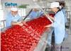 avanzado diseñado frutas máquina de clasificación