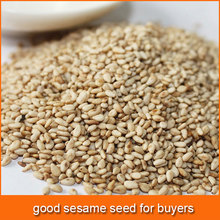 sesame seed for buyers