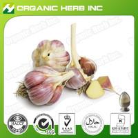 High quality garlic extract liquid Garlic root Extract